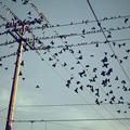Птица-зарница