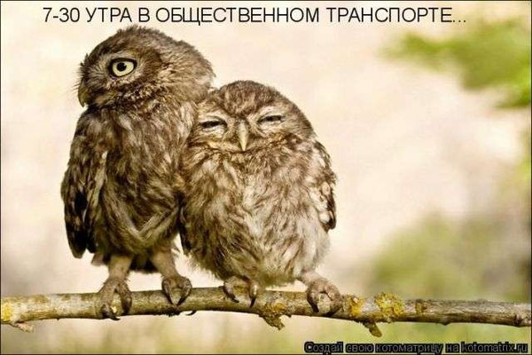 http://static.diary.ru/userdir/1/6/3/2/1632688/58934424.jpg