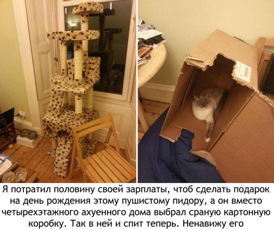 Как сделать коту домик своими руками из коробки