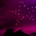 Ведьма с розой в волосах
