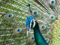 Что я за птица