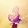 Fleurwind