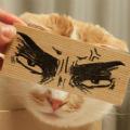 little clever cat