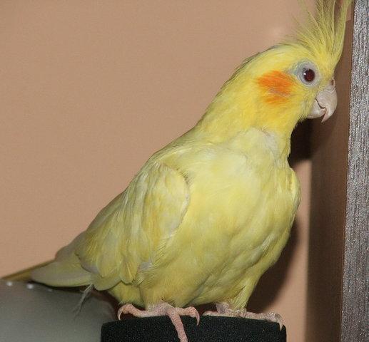 Старые птицы (которые перестают размножаться) живут