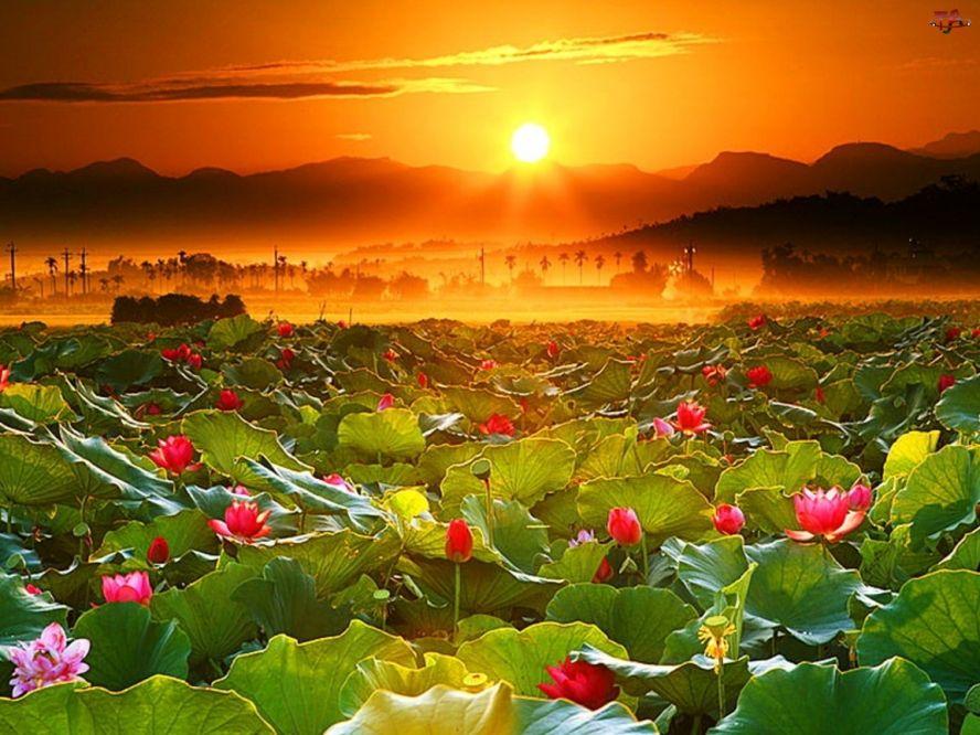 Прекрасные цветы фото картинки 3