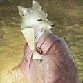 Darth Fox
