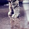 the cat.