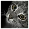 Туманная Кошка