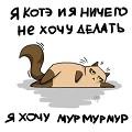кот-в-небесах