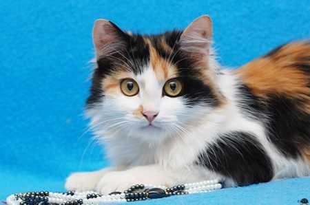 На теритоии живут кошки, которых руководство регулярно то травит, то.