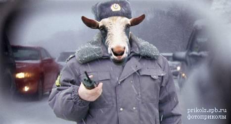 Наивысшей оценкой работы патрульной полиции должно стать доверие граждан, - Порошенко - Цензор.НЕТ 452