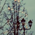 nightingalesister