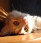 Почти Святая Кошка