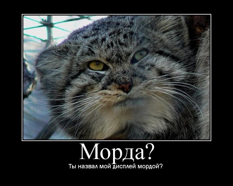 http://static.diary.ru/userdir/1/9/1/3/1913020/73852928.jpg