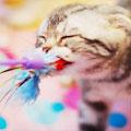 kitten-85