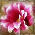 Очень нежный цветок