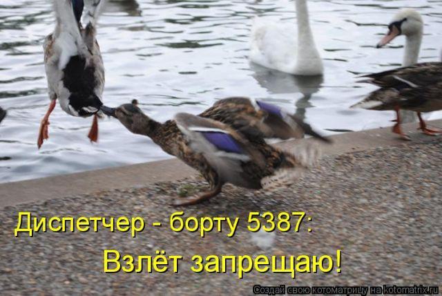 http://static.diary.ru/userdir/1/9/4/1/194103/57678717.jpg