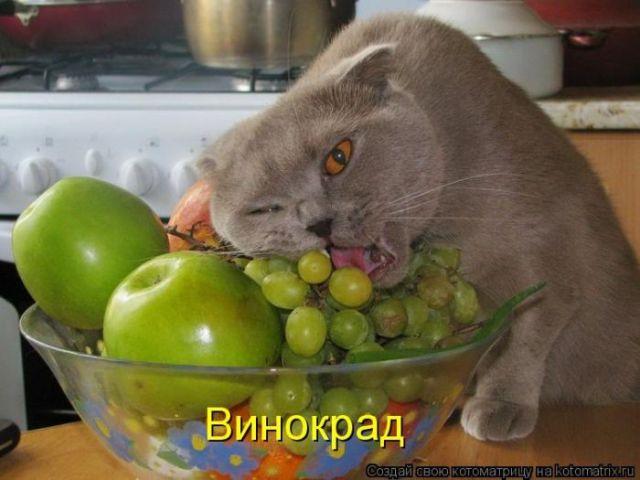 http://static.diary.ru/userdir/1/9/6/0/196069/56867279.jpg