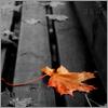 d-automne
