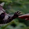 Spy Raccoon Miki
