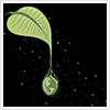 Кукурузная Леди