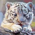 Тигряшка Ди