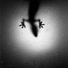 Черно - белое фото !  Раздел: Фотоподборки.  Добавить пост в избранное.