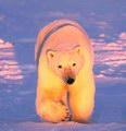 Марсианский Медведь