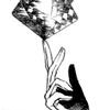 Luminosus