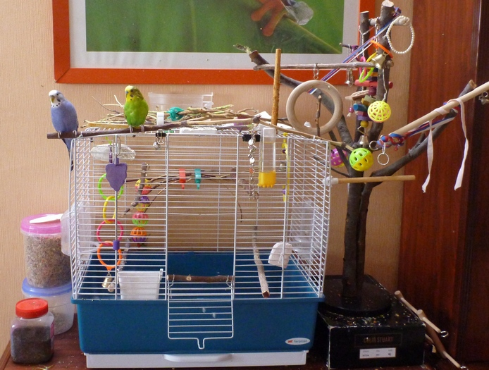 Фото клеток для попугаев в домашних условиях