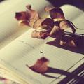 Autumn fairy-tale