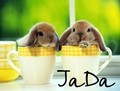 :JaDa: