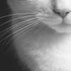 _саня кот. :3