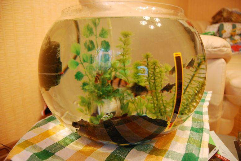 Круглые аквариумы фото