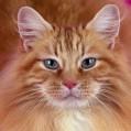 littlesunnycat