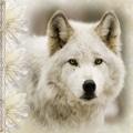 WolfbeRy