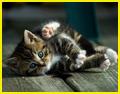 Солнечный Котёнок