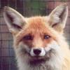 Lunar fox~