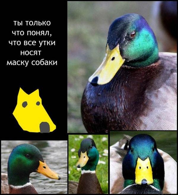 http://static.diary.ru/userdir/2/3/5/7/2357188/70468398.jpg
