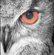 For Owlman