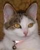 Солнечная кошка Ликс