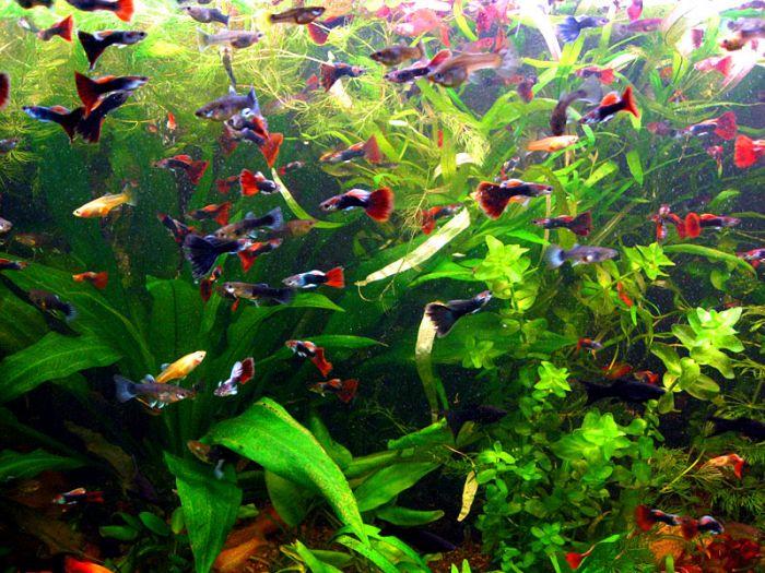 Re: Аквариумные рыбки.