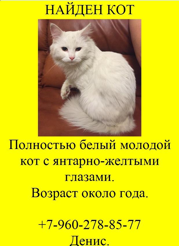 Как дать объявление в контакте о пропаже кошки как подать объявление бесплатно без регистрации