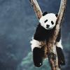 Panda_Ke