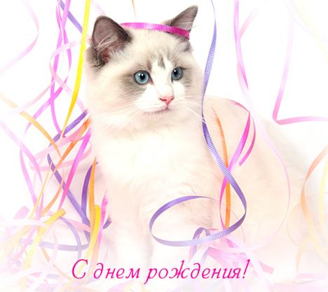 Поздравления с днем рождения женщине с кошкой
