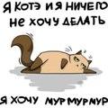 имбирный кот