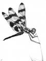 воздушная стрекоза [DELETED user]