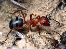 У муравьёв обнаружено экспертное мнение.