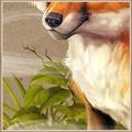 Kanaillenvogel