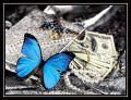 Papillon.A
